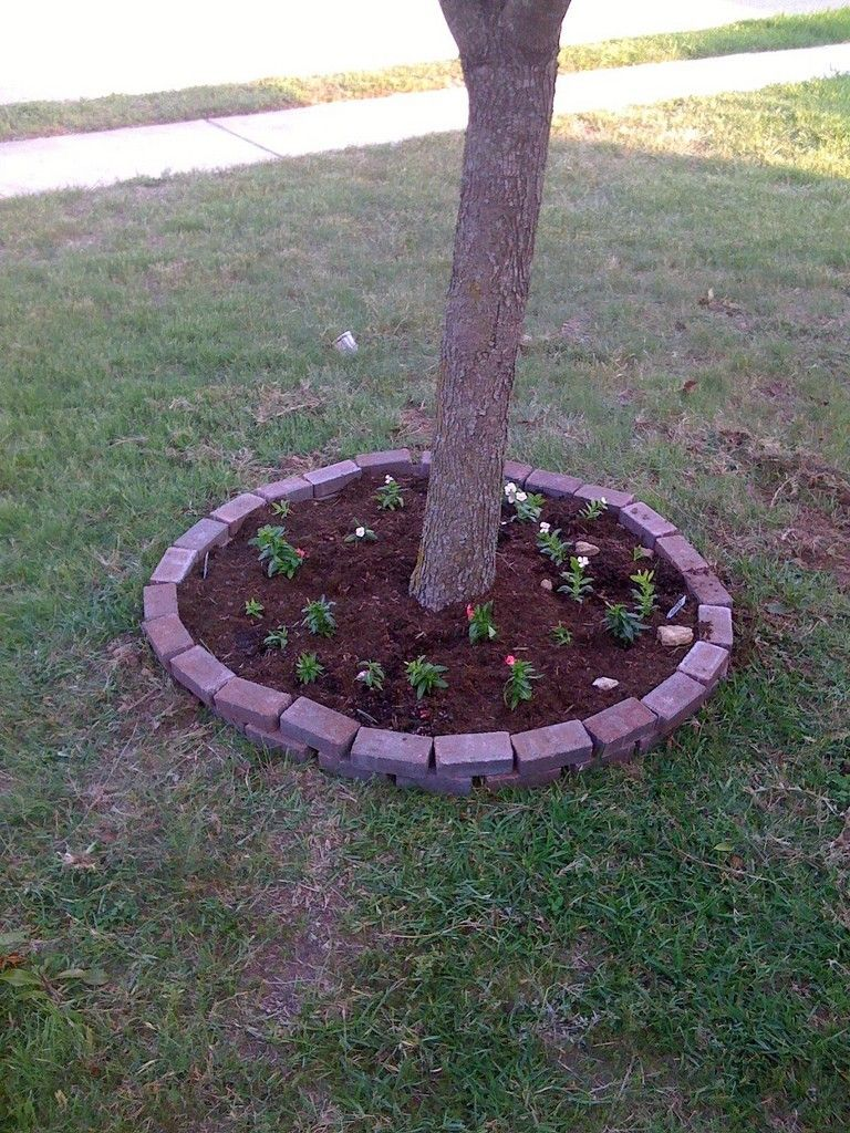 Flower garden ideas for under a tree - Planting Under Trees What Plants Or Flowers Grow Well Under A Tree