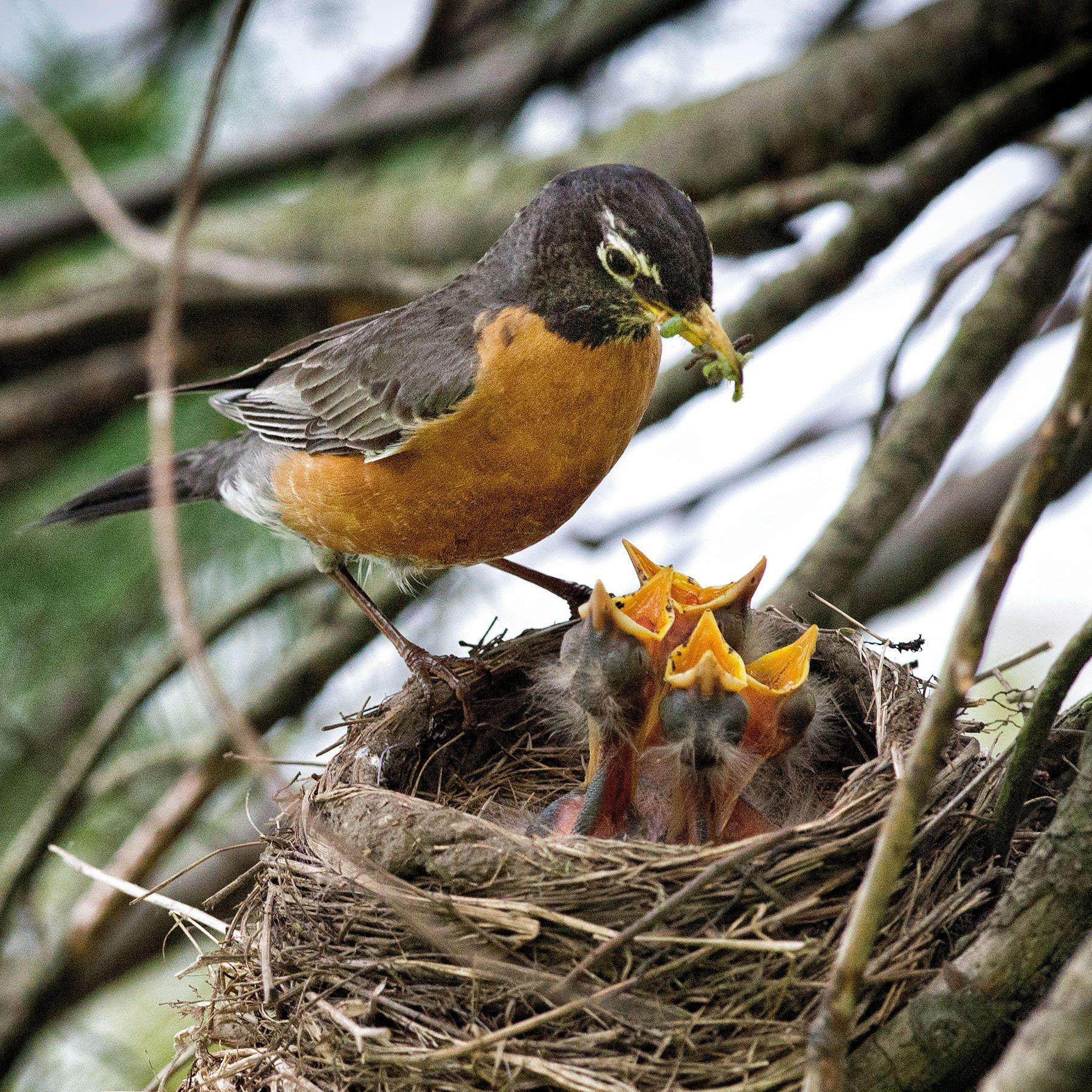 47681034d7942230e4f0cc4431deb156 - How To Get A Wild Baby Bird To Eat
