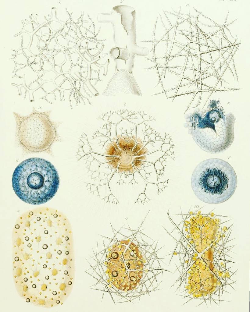 #SciArtFix Fossilized #Radiolaria (Subphylum #Radiozoa) for #FossilFriday. #SciArt by Erns… instagram.com/p/BQ6toH6hEKM/