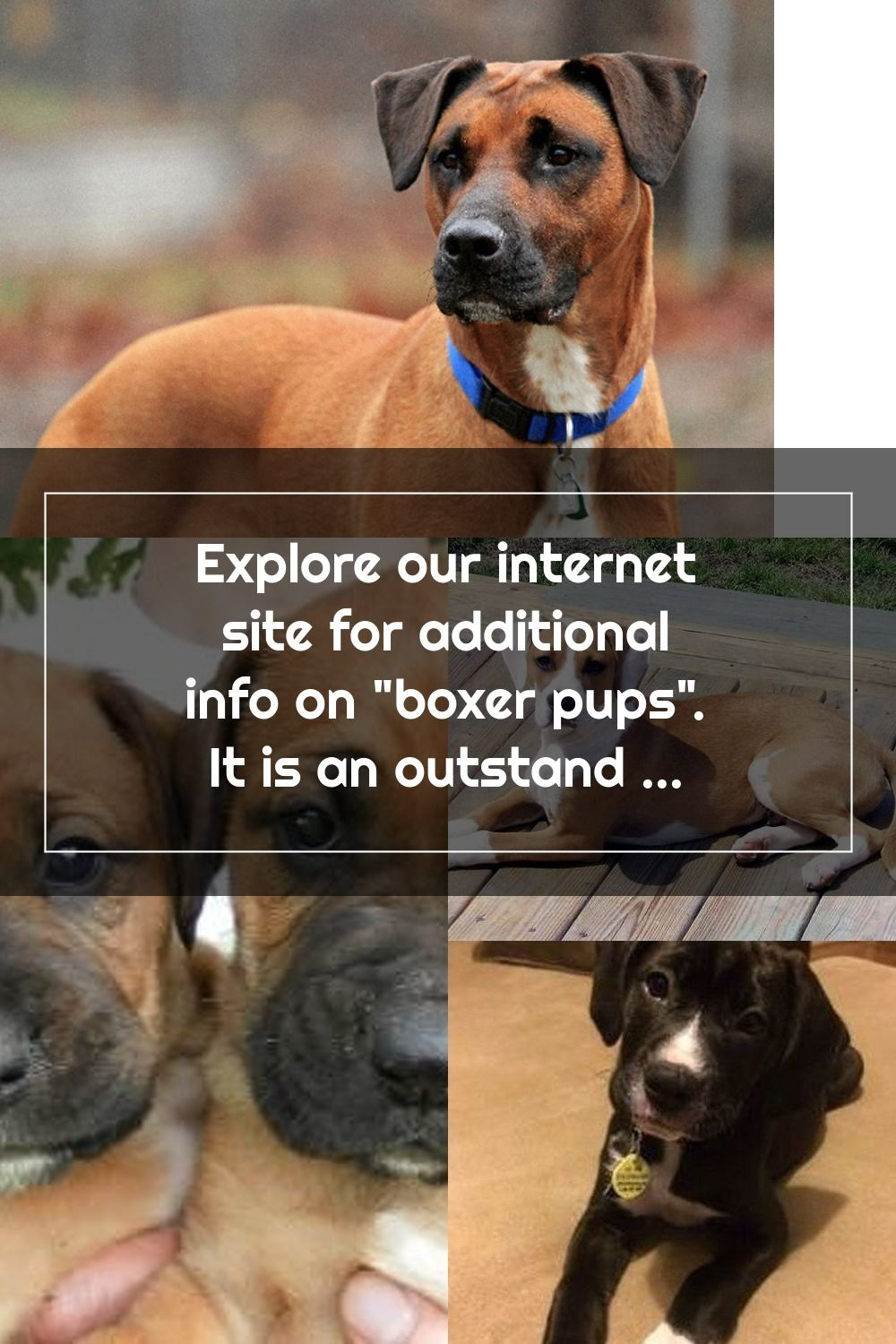Explore Our Internet Site For Additional Info On Boxer Pups It Is An Outstanding Spot To Find Out More In 2020 Boxer Puppies Pugs Funny Dog Training Obedience