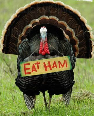 Chicken Eating Chicken Happy Thanksgiving To All Good Things You