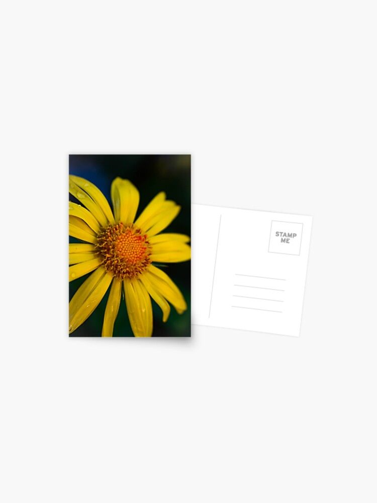Cool Yellow Daisy Beautiful Yellow Flower Greeting Card By Aloresarts In 2020 Unique Artwork Yellow Flowers Postcard