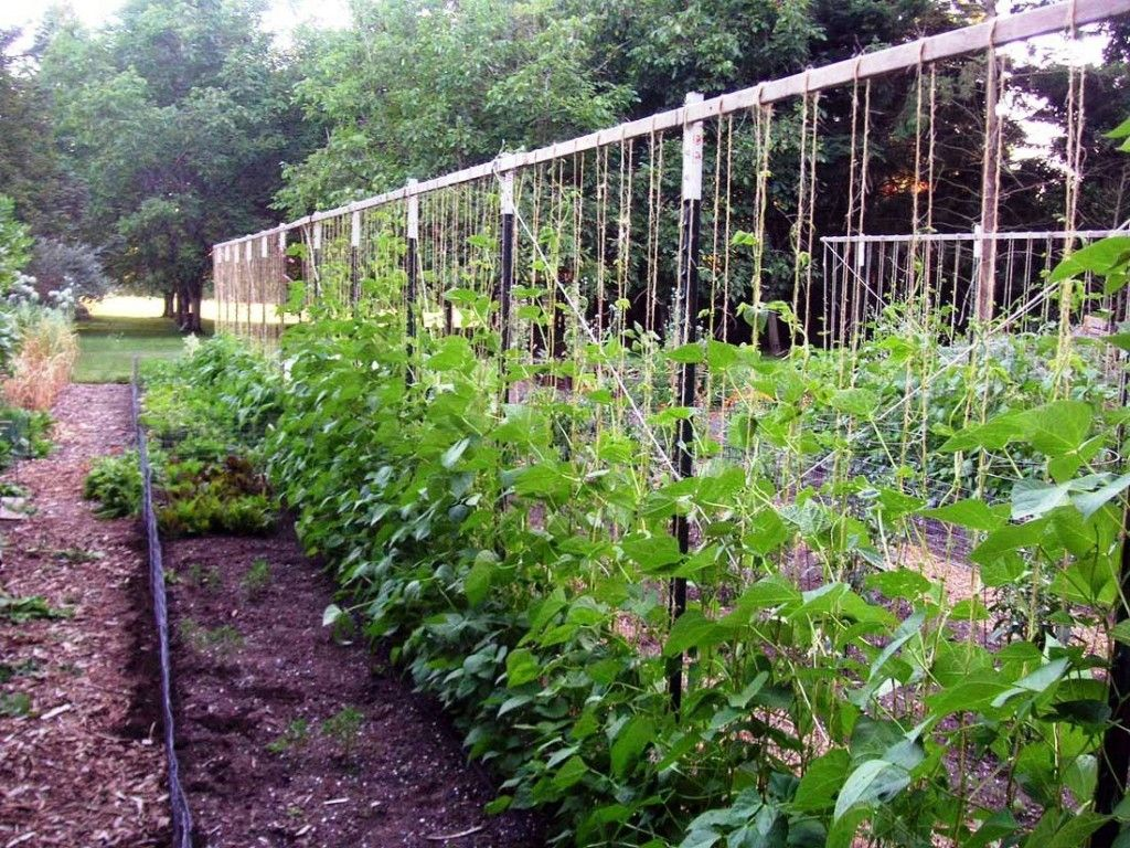 Vegetable Garden Trellis Ideas | http://web2review.info | Pinterest ...