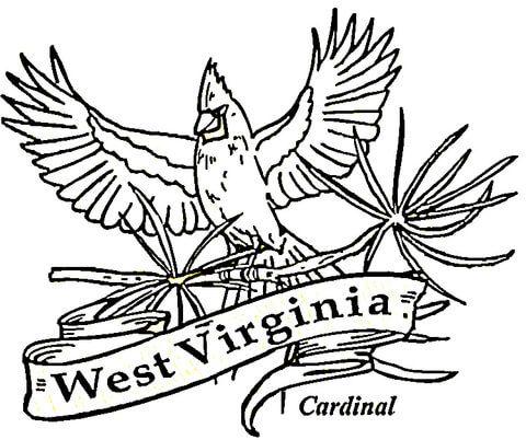 Pin By Karen Siders On West Virginia West Virginia Flower