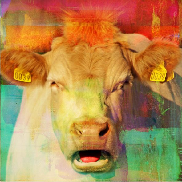 Cow madness