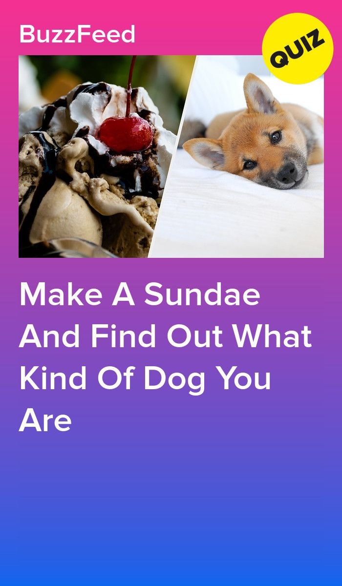 Make A Sundae And Find Out What Kind Of Dog You Are #whatkindofdog