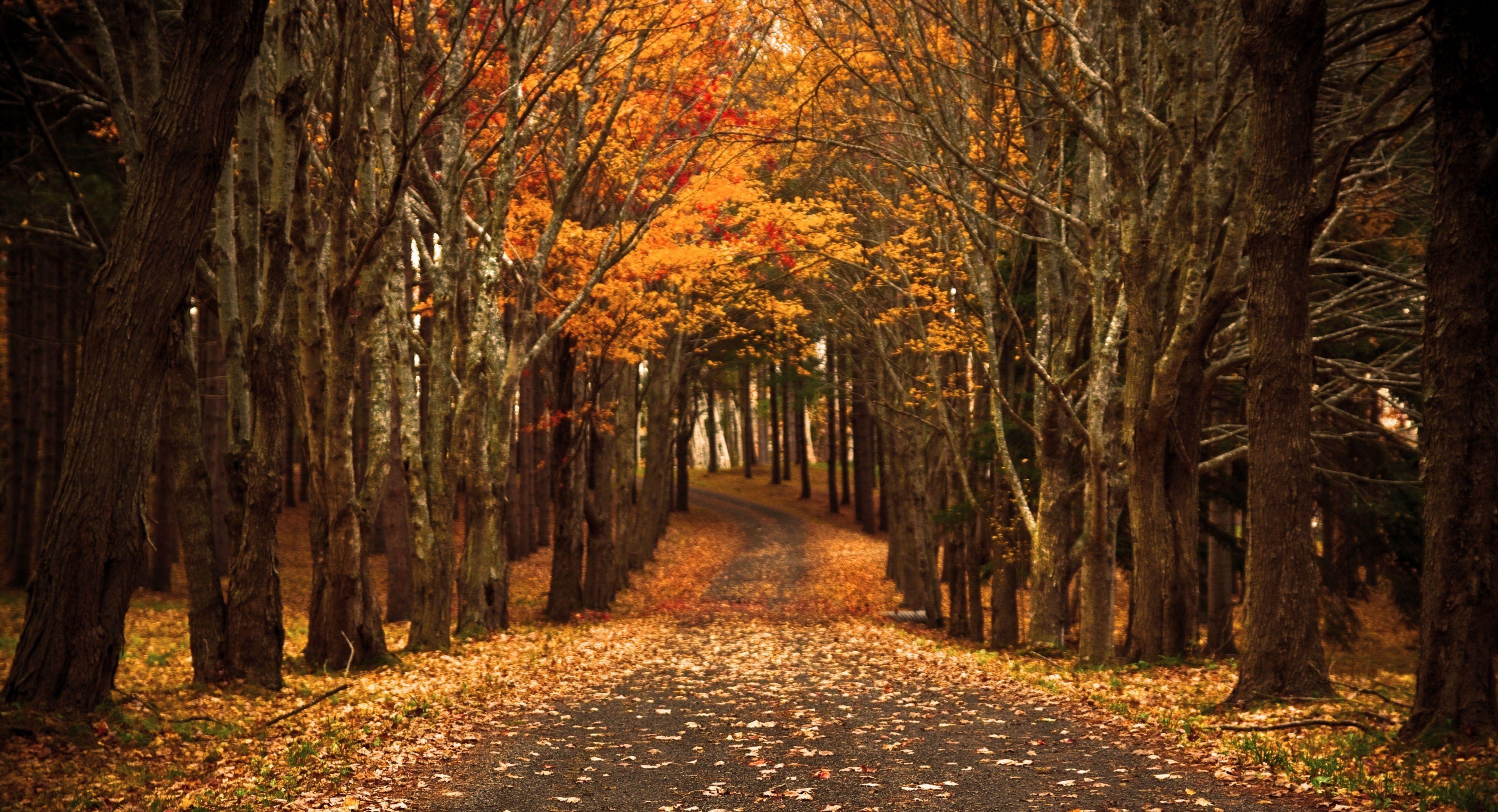 Late Autumn Autumn Wallpaper Hd Fall Wallpaper Backdrops Backgrounds