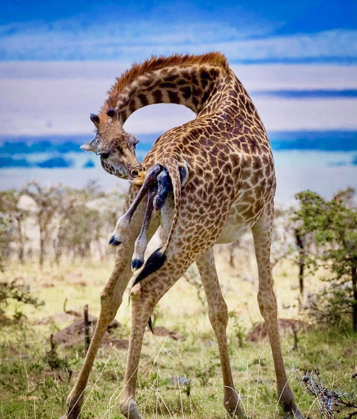 10++ Real life jungle animals images