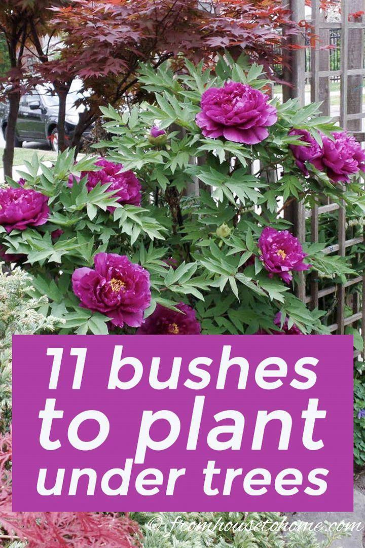 building flower garden #floweringplants