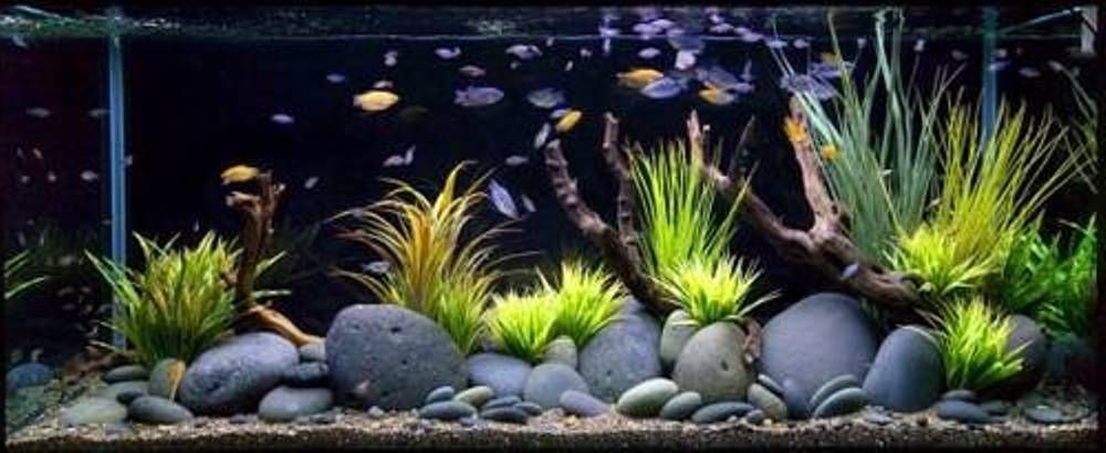 Stones fish tank decoration ideas good fish tank for How to decorate fish tank