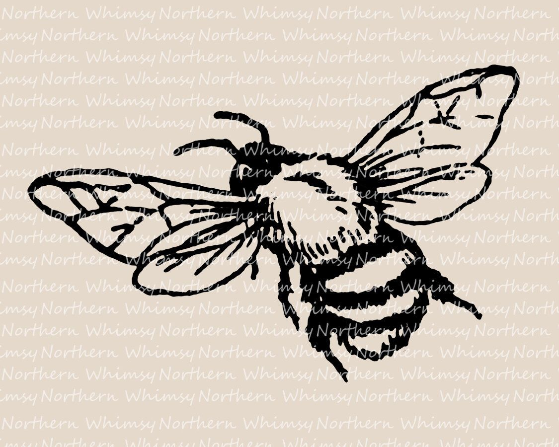Bee Clip Art - Vintage Bumble Bee Image - Bee Illustration - Insect ...