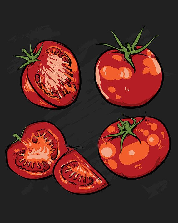 80% Off Sale Tomato vector drawing. Isolated tomato and sliced piece. Vegetable engraved style illustration. food sketch. (EPS, VECTOR, JPG)