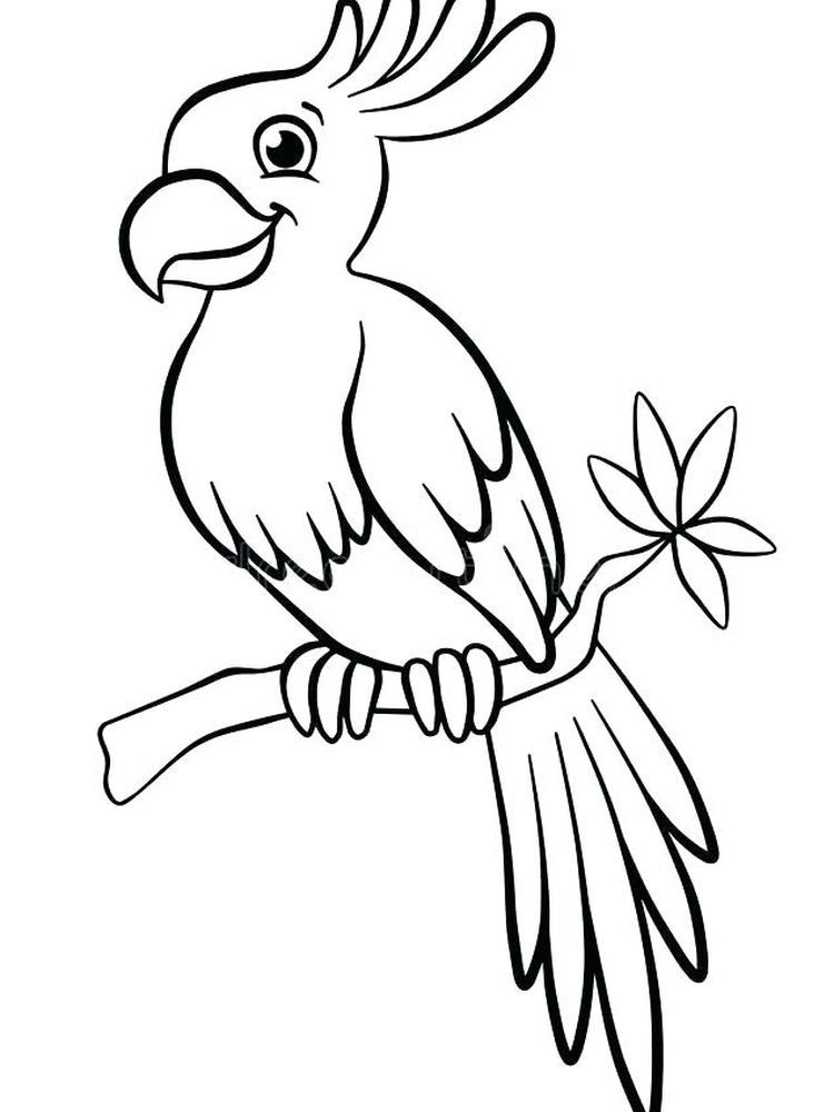 Coloring Flying Pages Parrot 2020