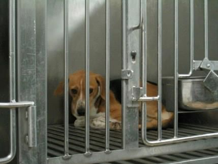 Email To Astrazeneca What Happens To The Dogs After They