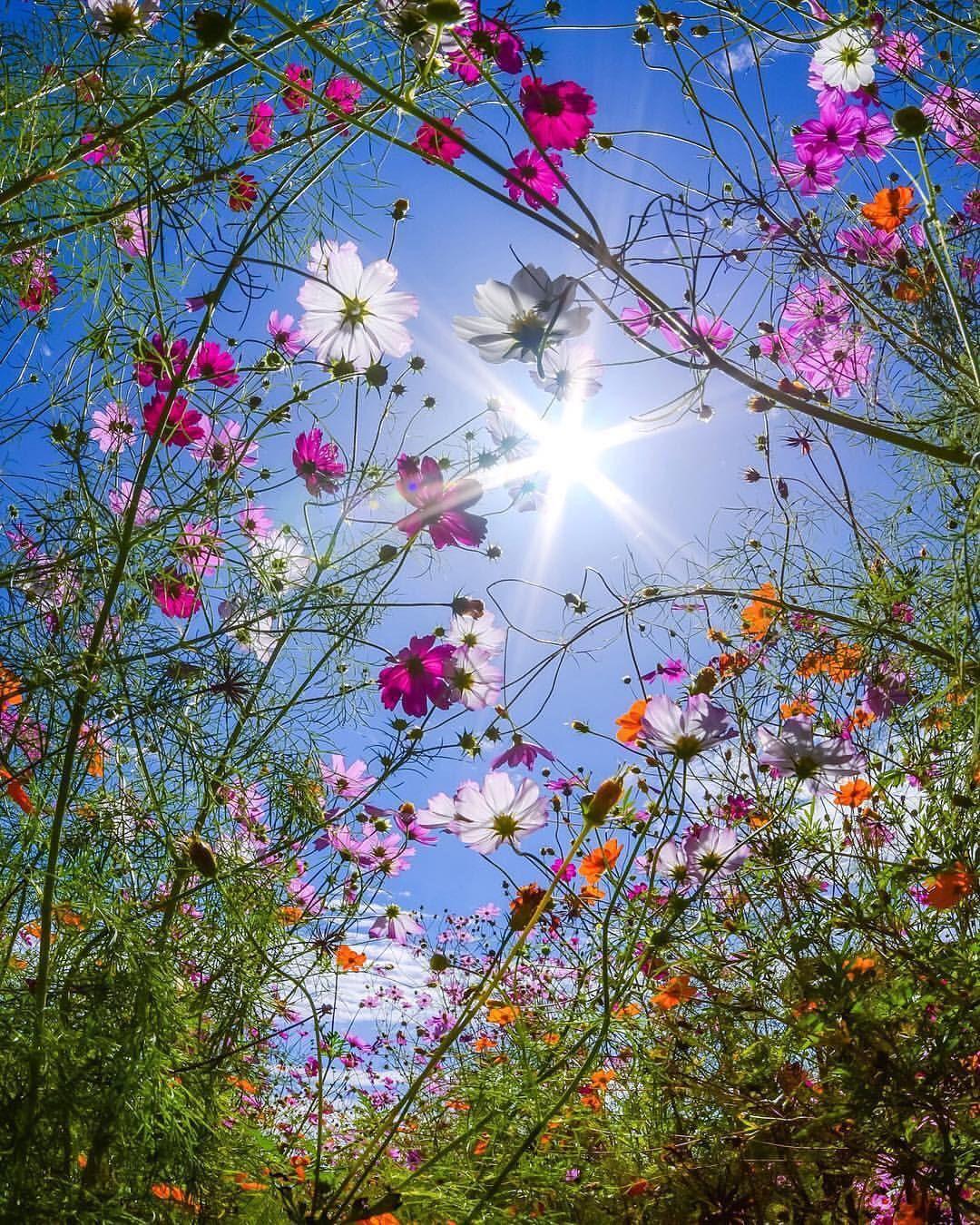 Photo By Kenken 728 Flowers Japan Beautifuldestinations Earth Wo Flowers Photography Beautiful Flowers Amazing Flowers