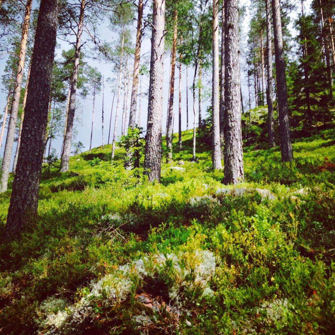 Naturen - swedish nature