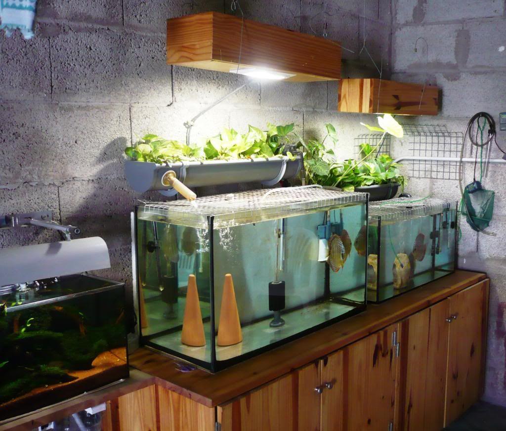 El uno dos tres de la acuapon a aquaponics ideas for Filtros de agua para estanques de peces