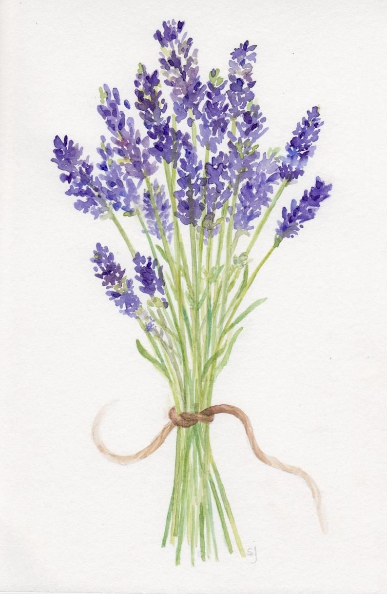 Lavender Artwork Watercolor Lavender Bouquet Original Painting