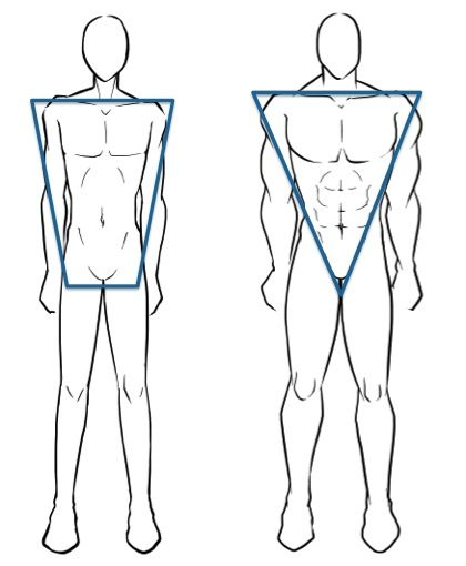 c221d858472 2 Male Body Shapes  Trapezoid   Inverted Triangle