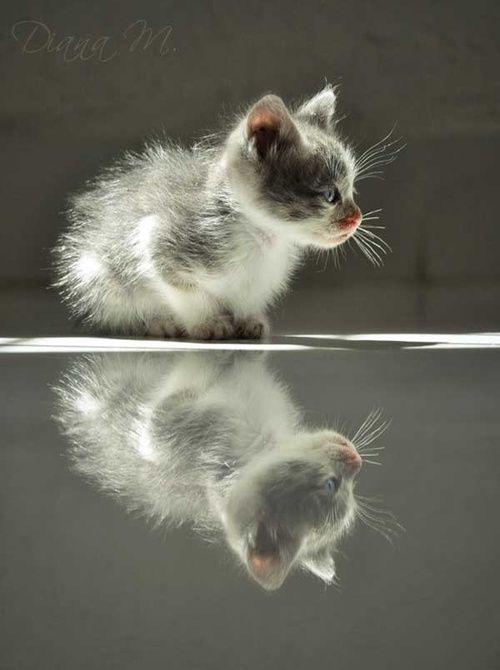 Sweet Reflection! ♥