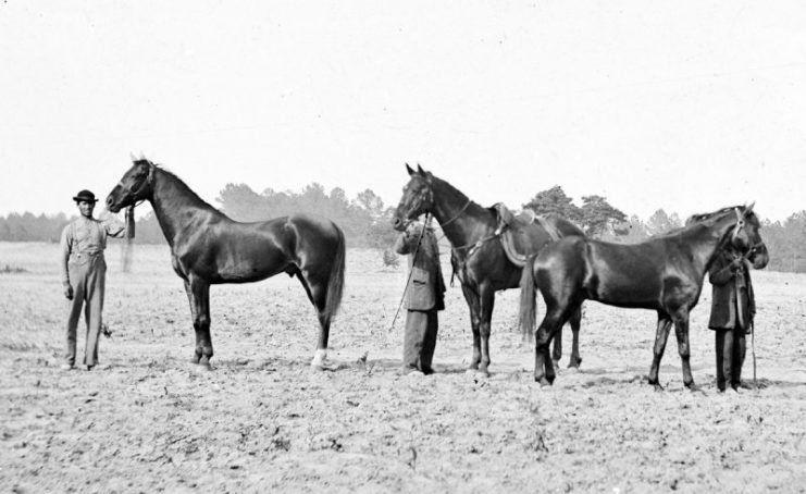 10 Most Famous Horses In Warfare Horses War Horse Beautiful Horses
