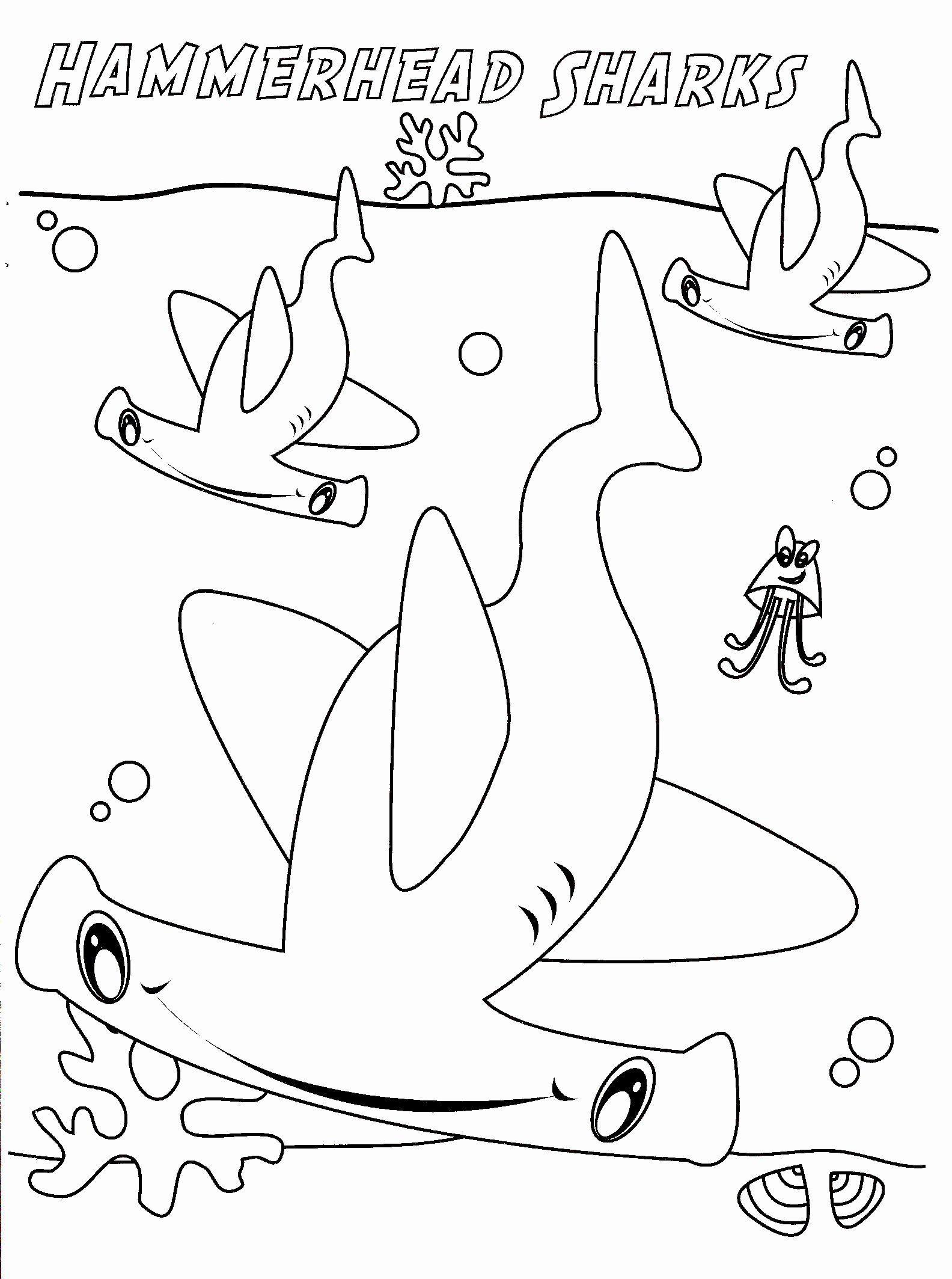 Hammerhead Shark Coloring Page Fresh Hammerhead Shark Drawing At Getdrawings In 2020 Shark Coloring Pages Coloring Pages Nemo Coloring Pages