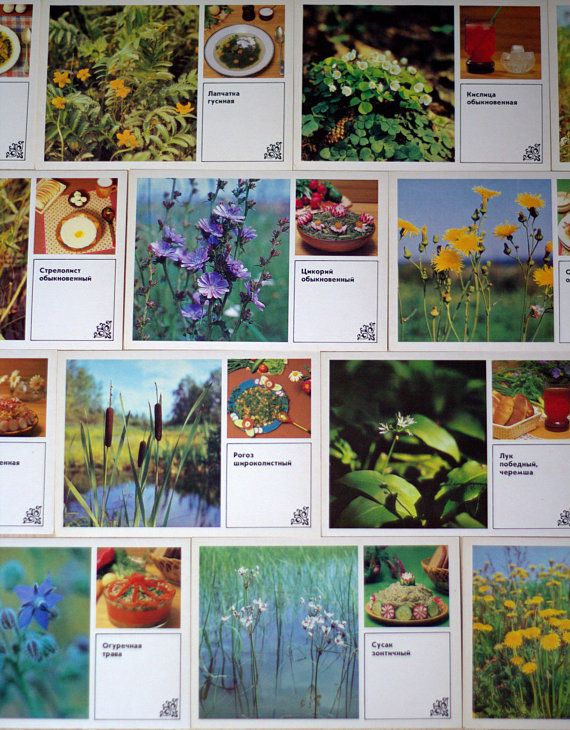 Vintage food recipe cards wild grassy postcards soviet recipes vintage food recipe cards wild grassy postcards soviet recipes russian dishes traditional meals set of 15 color cards plants of russia forumfinder Images