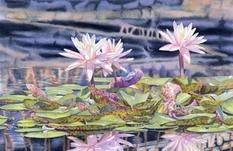 Lorraine Watry Fine Art - Watercolor Paintings, Watercolor Classes, Watercolor Painting For Beginners