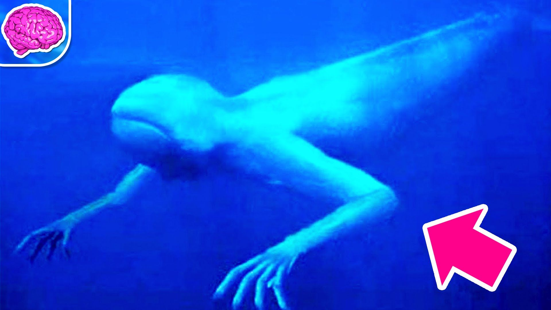 7 Most Terrifying Animals Of The Deep Ocean - YouTube ...