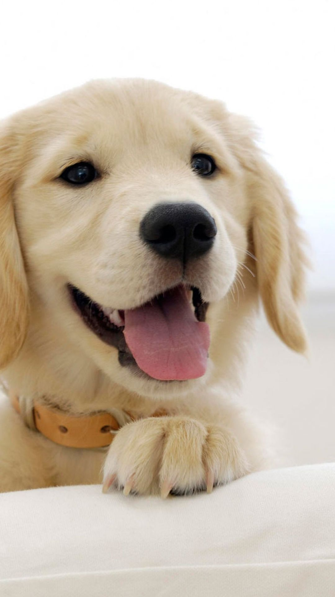 Golden Retriever Puppy Cute Dog Muzzle Dog Muzzle Cute Dogs And Puppies Dogs