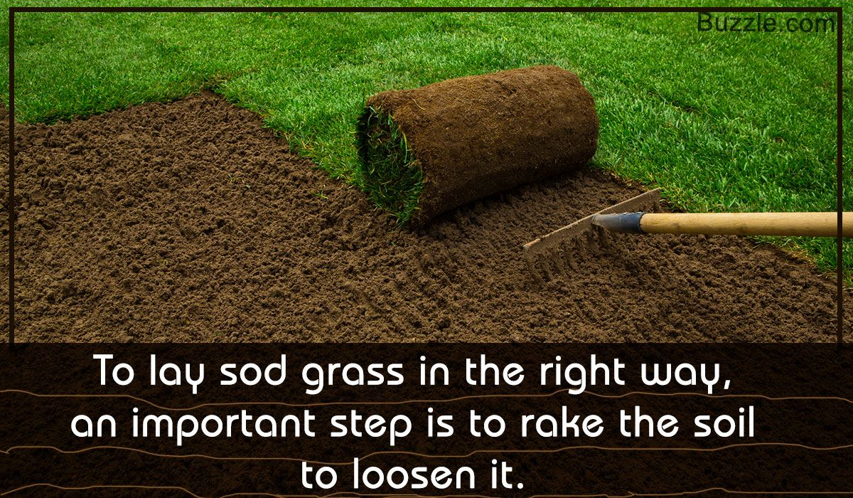 Sods Are Ready Made Grass Slabs That You Can Lay In Your Yard For An Instant Green Garden Laying The Sod Grass Is So Sod Grass How To Lay Sod Sod Installation