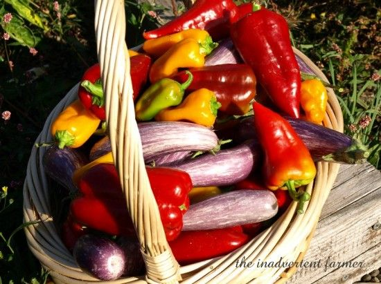 Organic Gardening from the ground up