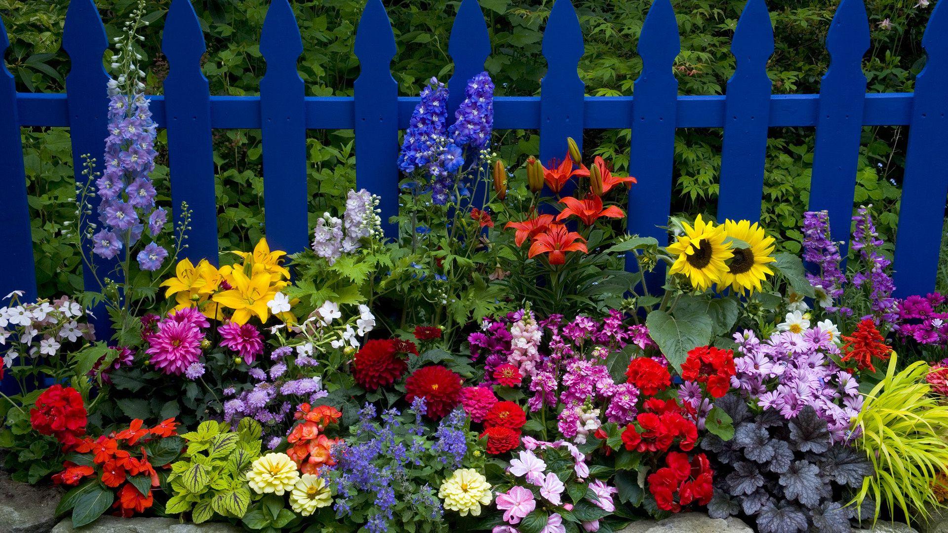 Fond d'écran hd : jardin fleurs  Fond d'écran hd gratuit ...