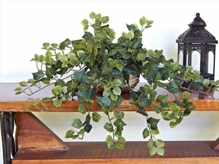 Efeu Zimmerpflanze pflegeleiche zimmerpflanzen heilkraeuter efeu blumen und