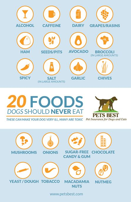 20 Foods Dogs Should Never Eat Dog Food Recipes Dogs Cool Pets