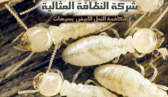 شركة مكافحة النمل الابيض بسيهات 0562198010 Termite Control Termites Pest Control