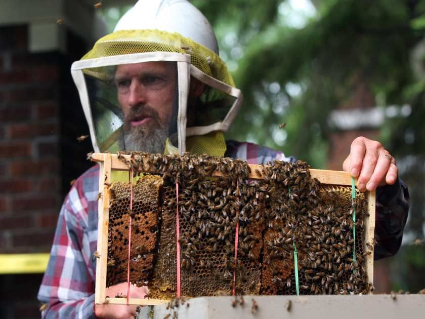 Getting rid of bees by remove honey bees from homes and