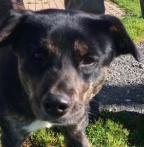 Adopt Sierra On Petfinder Dog Adoption Labrador Retriever Mix Dogs