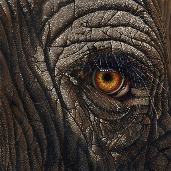 Elephant Eye by Jurek Zamoyski   Elephants   Elephant eye ...
