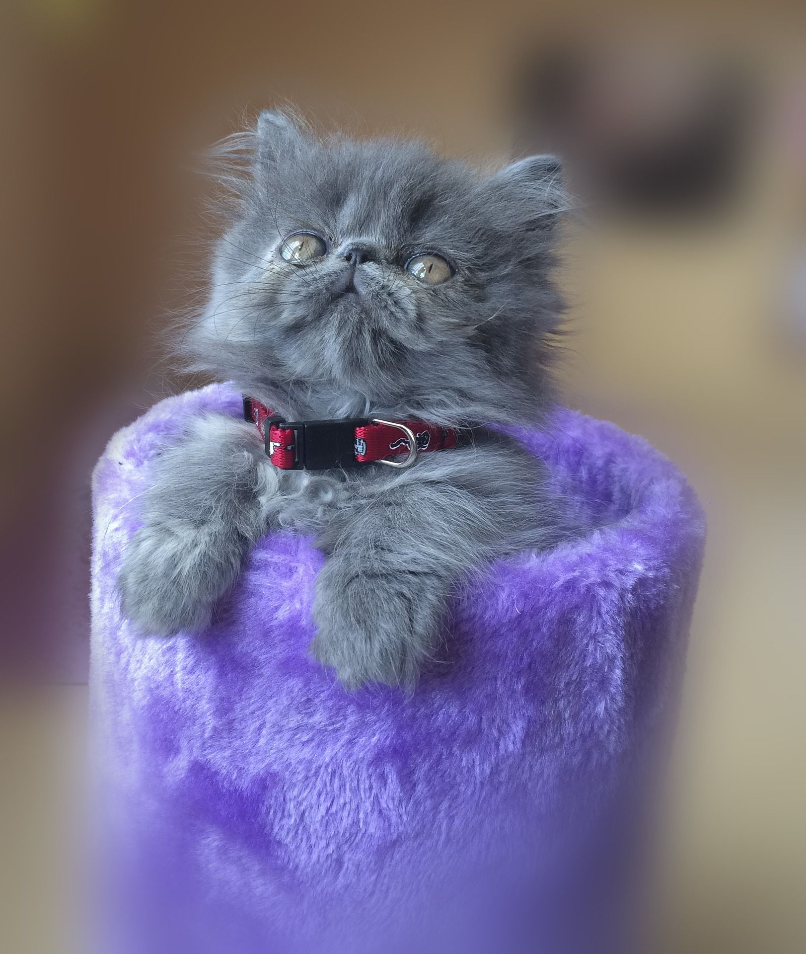 Pin On Pretty Purrrrple Kitty Cats If You Love Purple