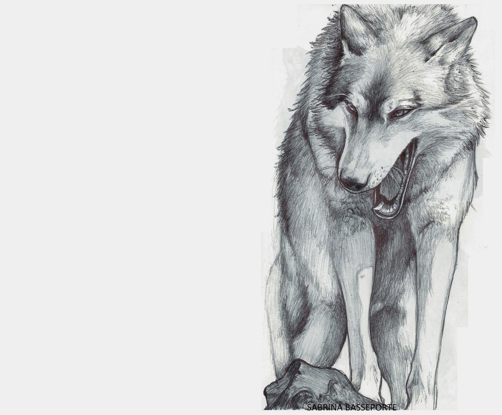 Loup féroce Sabrina Basseporte   dessin   Pinterest   Loups ...