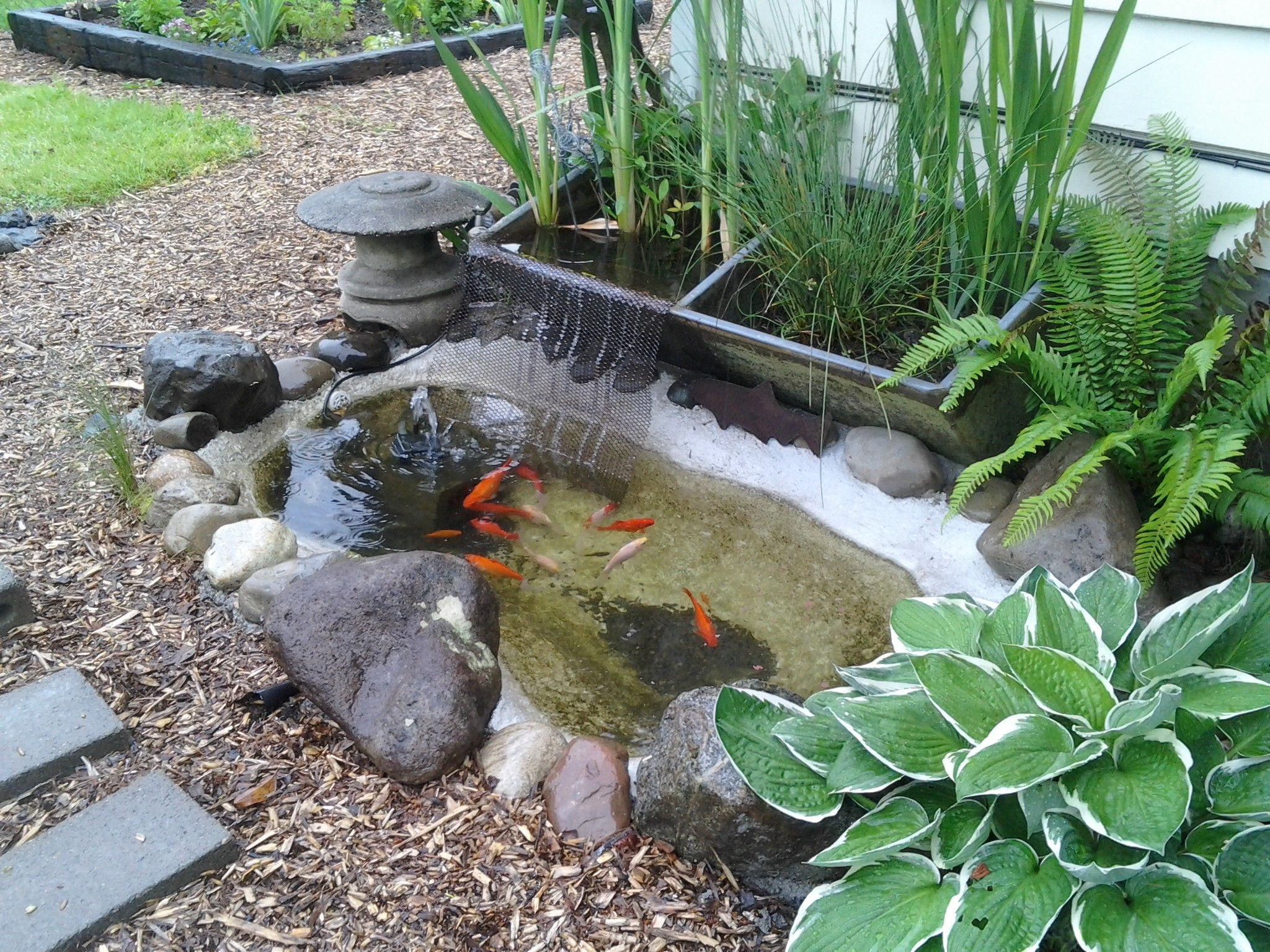 My pond reused rainwater from the downspout filters thru for Filters for outside ponds