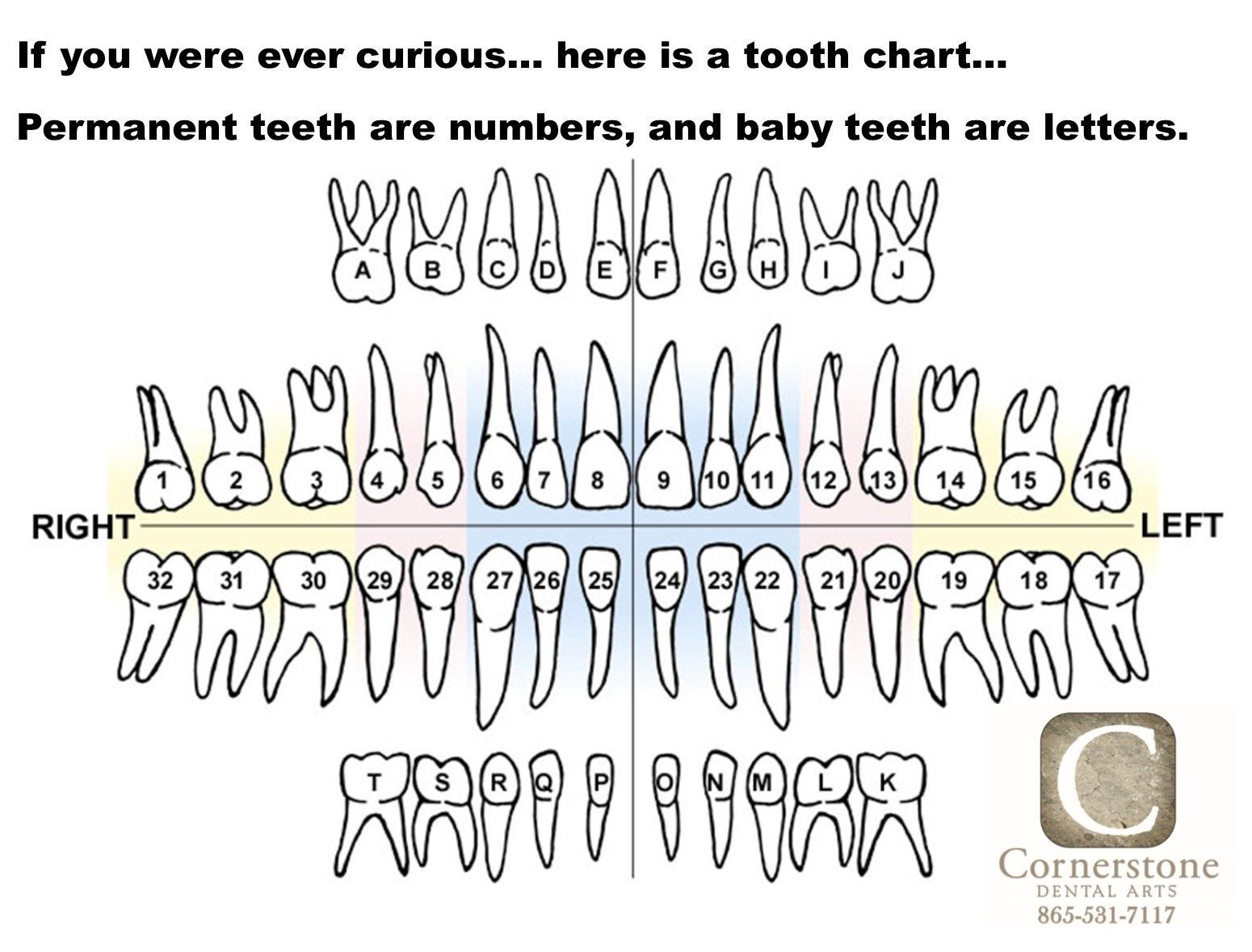 Baby tooth chart letters tooth chart