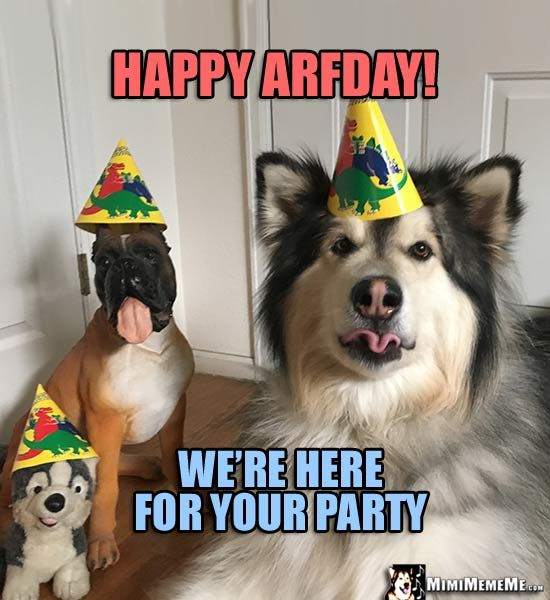 4772f2e054db14ac75f70ed217759c48 dog birthday meme happy arfday! we're here for your party funny