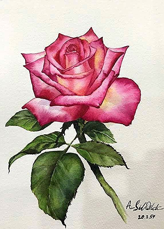 Pin By Selen On Blomma In 2020 Rose Painting Watercolor Paintings Easy Watercolor Flowers Paintings