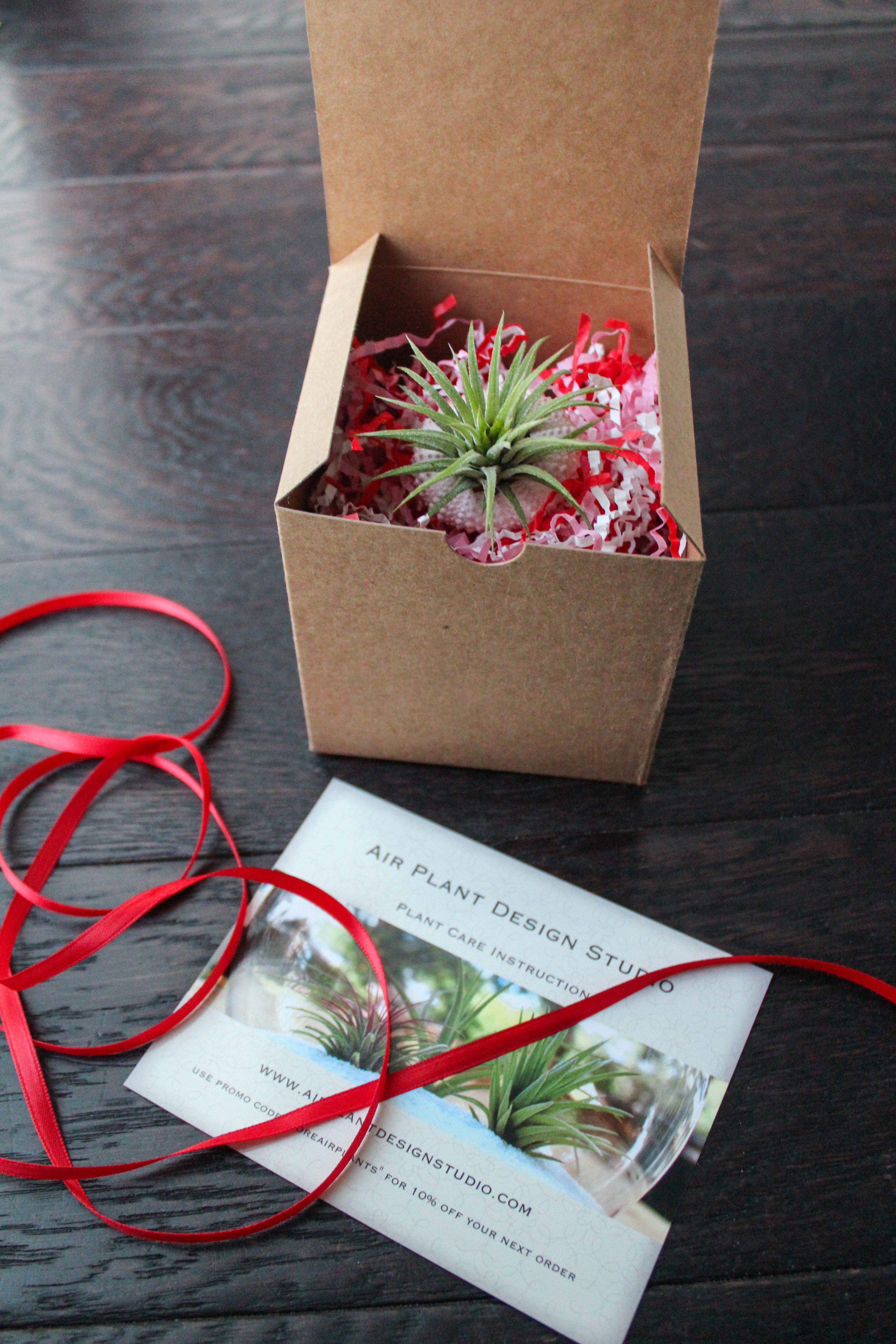 Valentines' Day Air PlantOGram Air plants, Flower