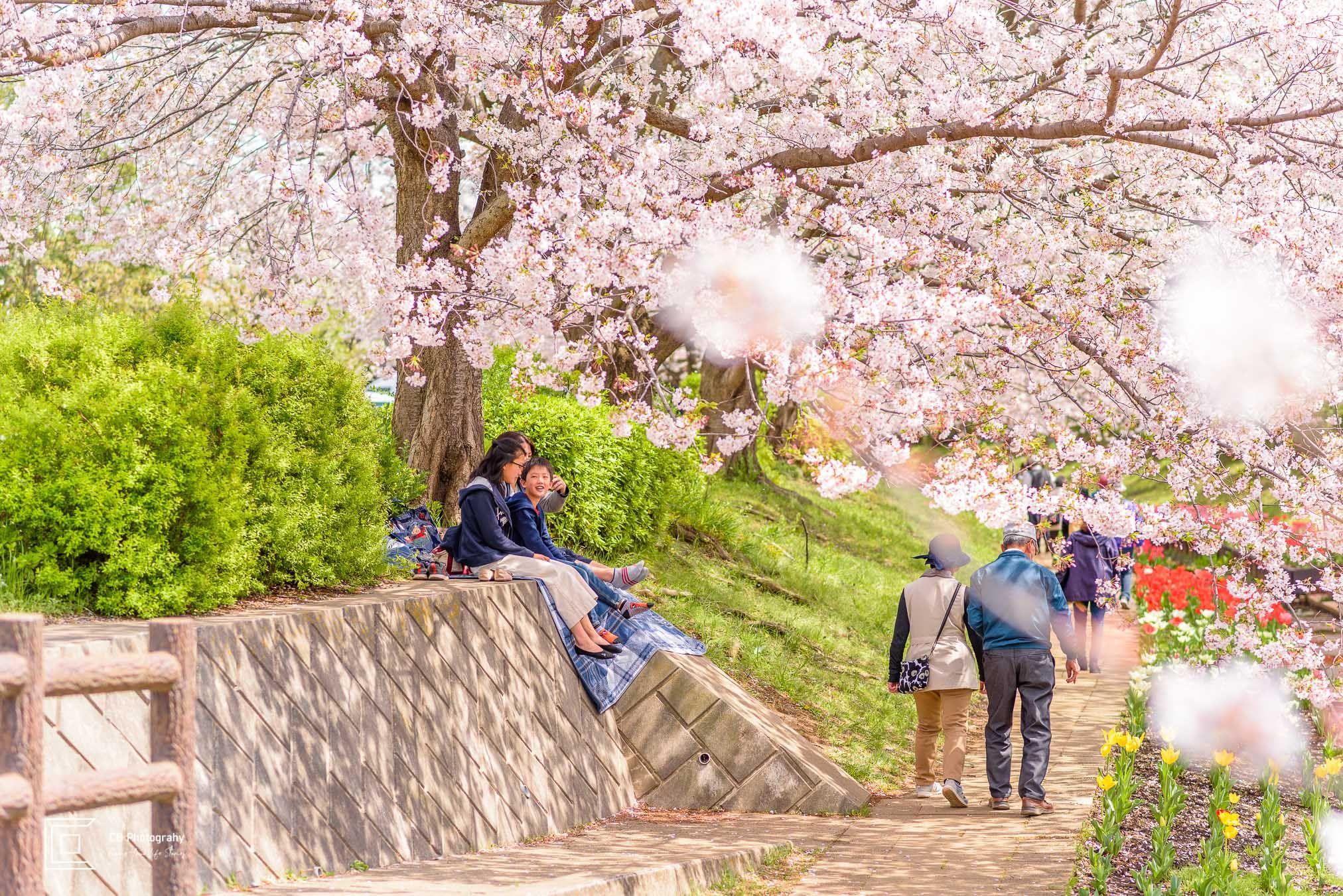 The Best Place For Sakura Photos In The Spring Of 2020 In Japan Photographer In Tokyo Metropolitan Area Photo Sakura Sakura Tree