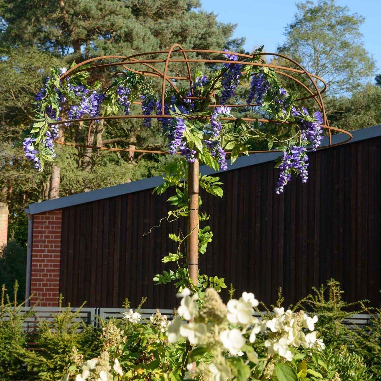 Wisteria Umbrella Plant Support Harrod Horticultural Wisteria Plant Plant Supports Wisteria Tree