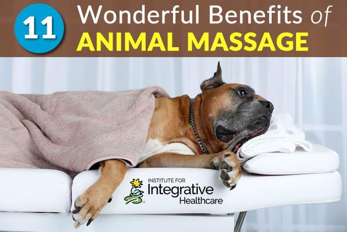 11 Benefits Of Animal Massage Dog Clinic Massage Dog Training