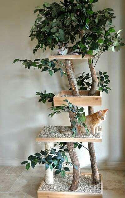 cat tree prettiest cat pinterest cat tree prettiest cat and rh pinterest com